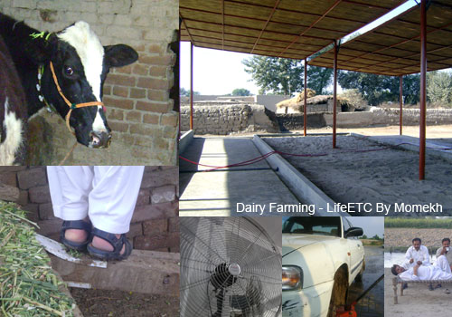 Dairy Farming in Pakistan Business Plan